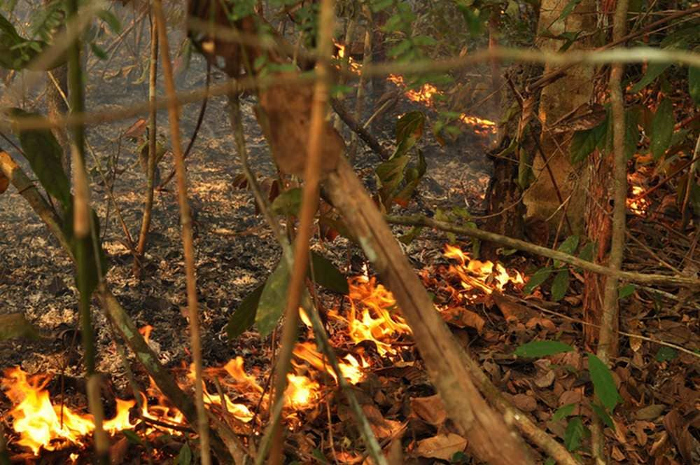 Fire creeps along the floor of a previously undisturbed Amazonian rainforest. Jos Barlow, Author provided