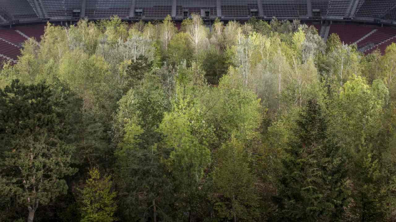 Artist transplants 300 trees on to football stadium in Austria for the sake of art- Technology News, Firstpost