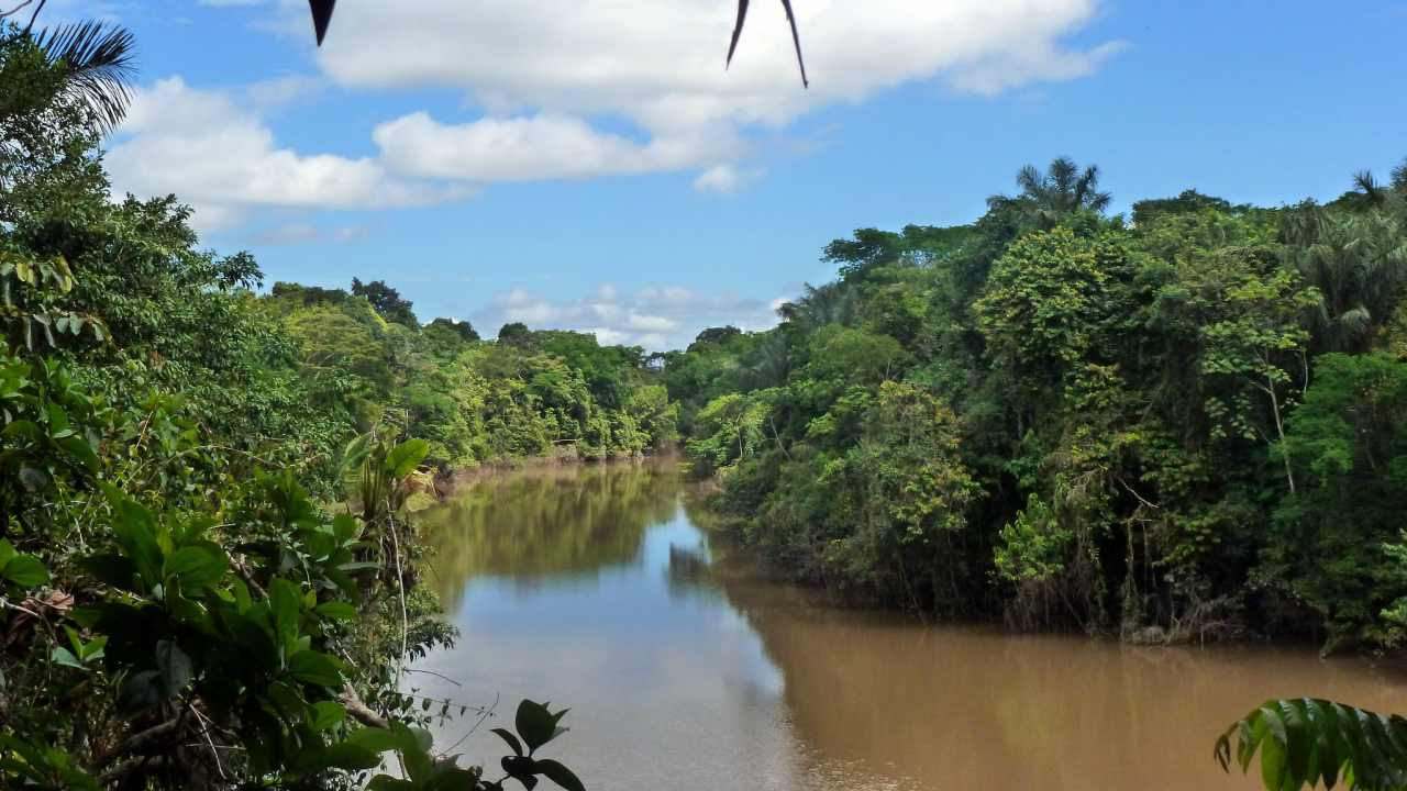 Reseachers discover two new electric eel species swiming in the Amazon basin