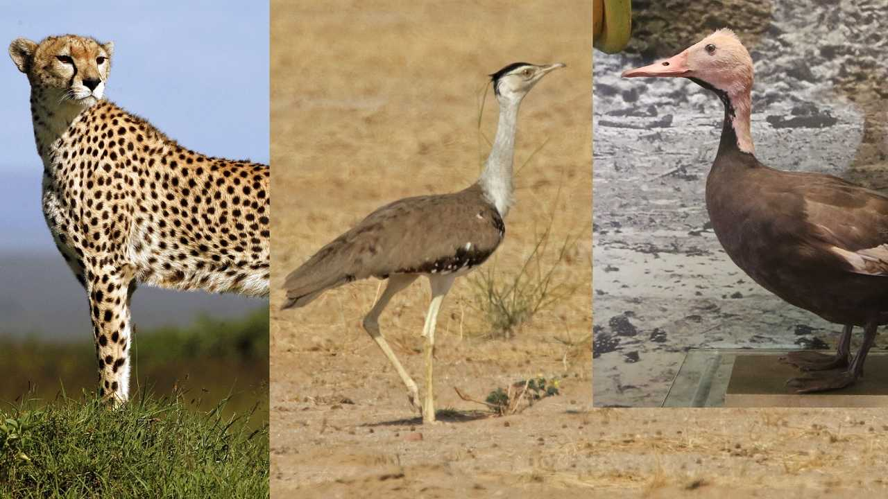 Three iconic species endemic to India gone extinct due to desertification: Researchers