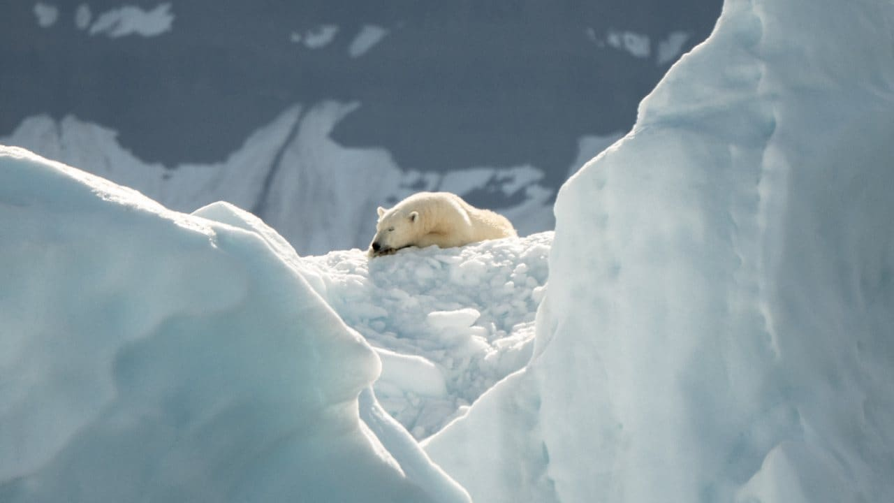 Polar bears depend on Arctic sea ice.