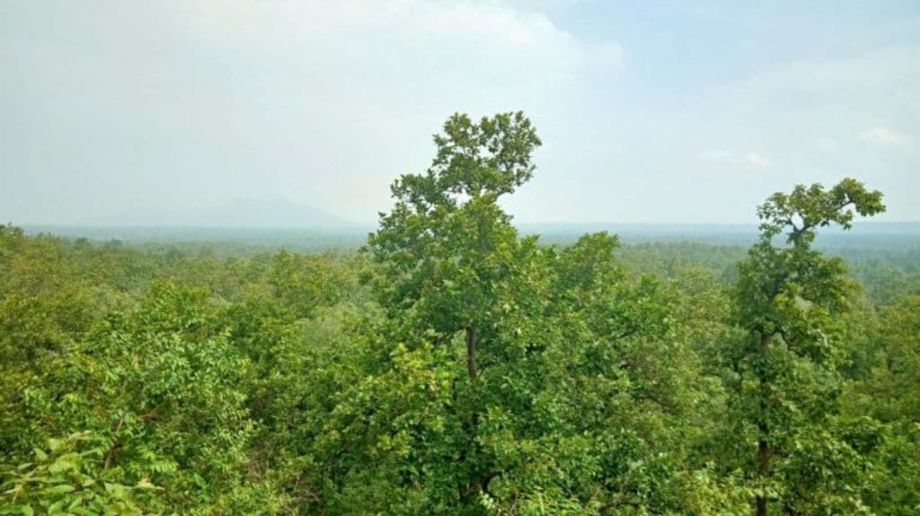 View of the forest in Katghora forest circle which is a part of the Lemru elephant reserve. Photo by Asha Verma.