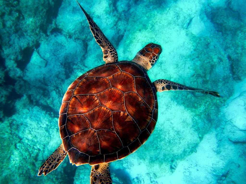 Wildlife Week 2019: A saga of Indias Turtle Man Friday and the sea turtles he is fighting to protect