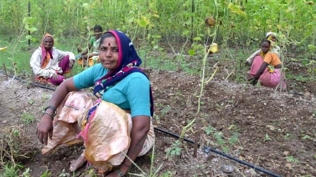 Women farmers have led from the front to adopt organic farming practices. Photo credit: Swayam Shikshan Prayog/The Third Pole.