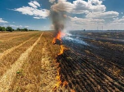 What came first - Pollution or stubble burning?