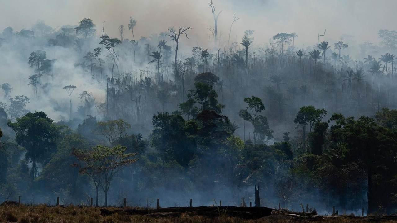 Rainforests in 2020: Trends and happenings that could decide the fate of rainforests this decade