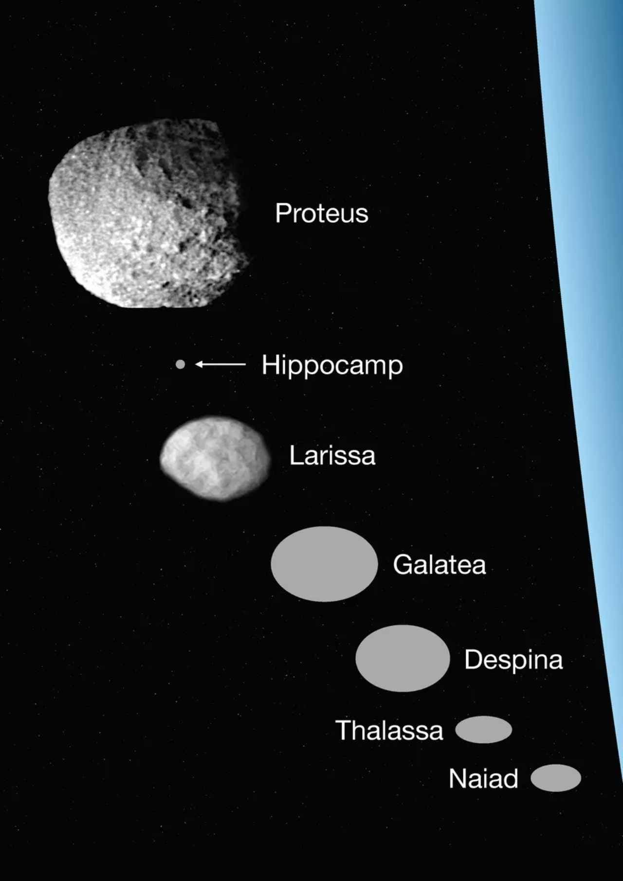 The relative size of several Neptune moons, including the Hippocamp. Image credit: Mark Showalter / SETI Institute