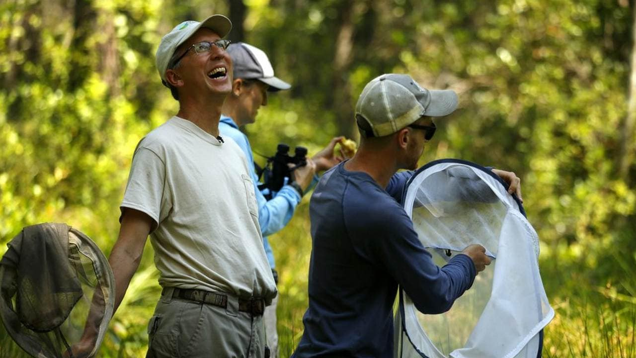 Nick Haddad, left, watches a captive-bred female St. Francis' satyr butterfly fly off after it was released into the wild at Fort Bragg in North Carolina. Image credit: AP