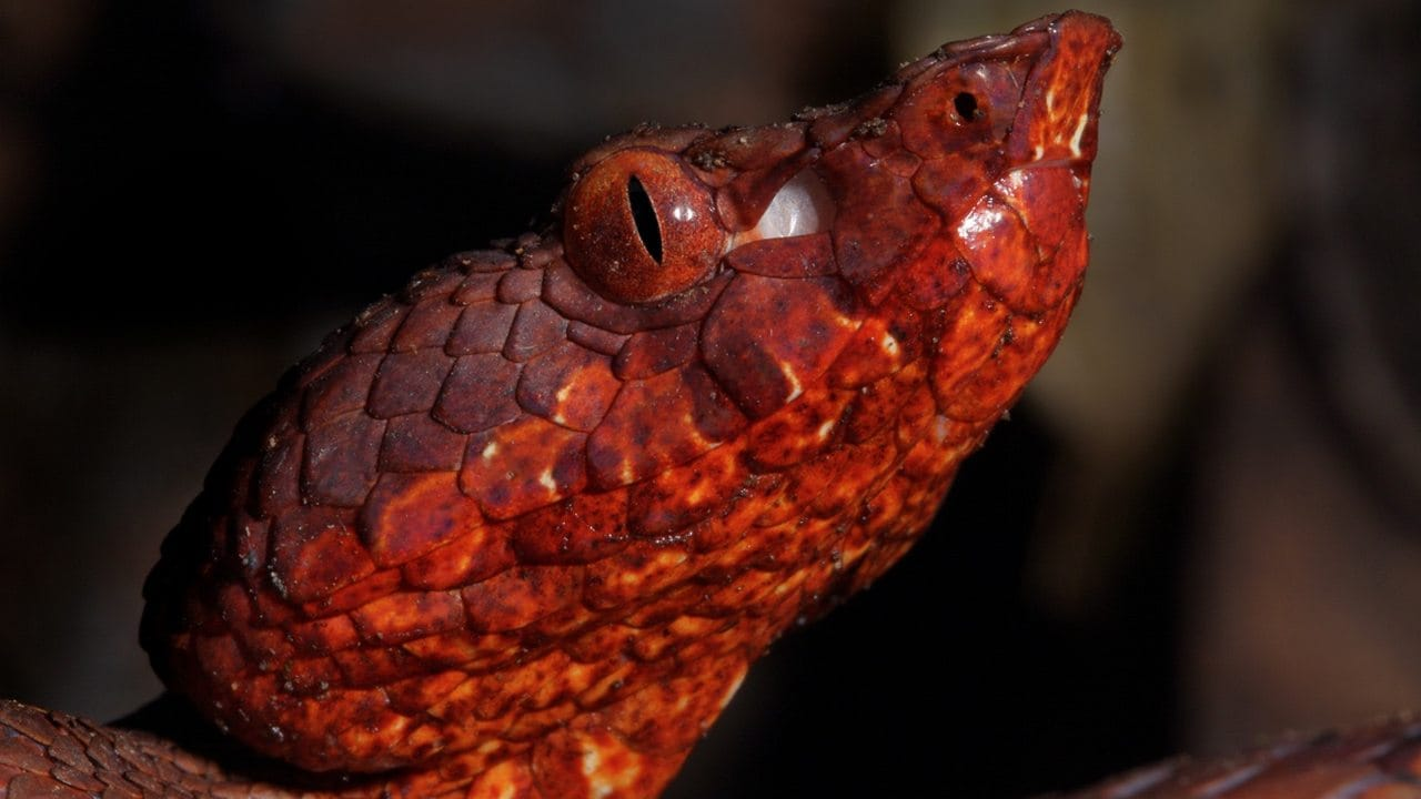 Wildlife discovered in 2019: From leaf like lizards, venomous vipers to human sized leaves- Technology News, Firstpost