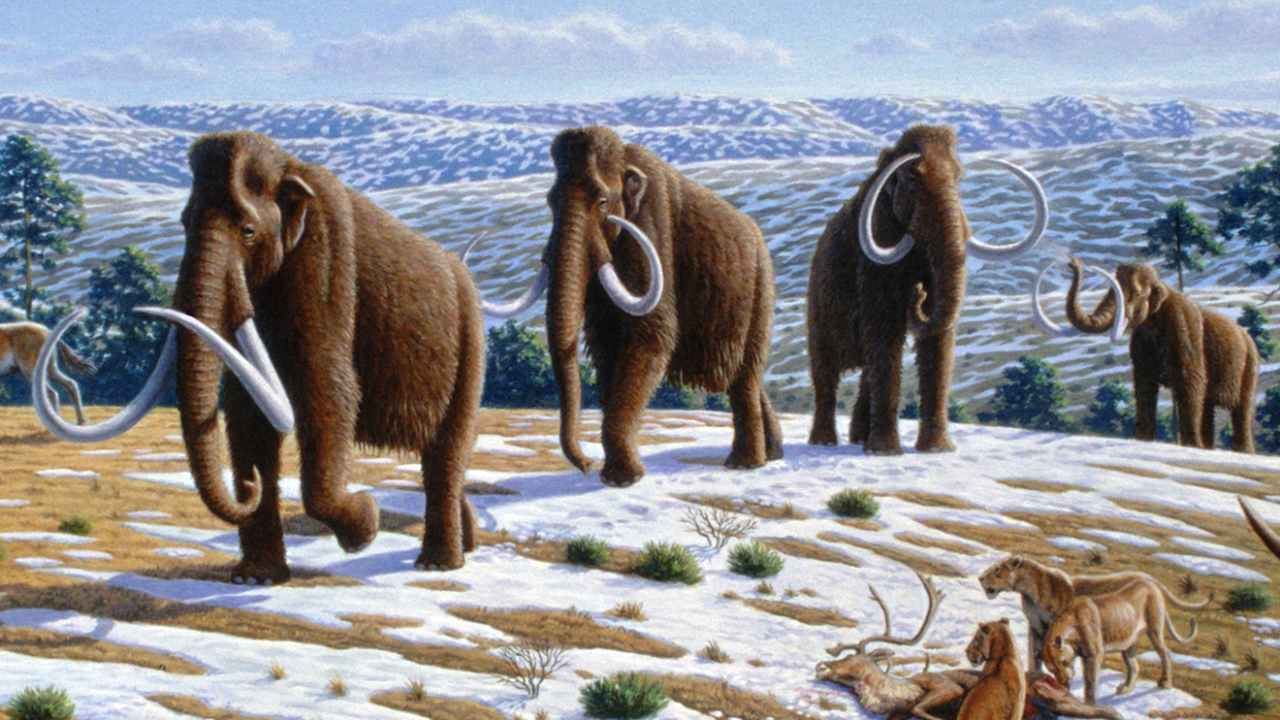 Woolly mammoths suffered genetic defects because of generations of inbreeding