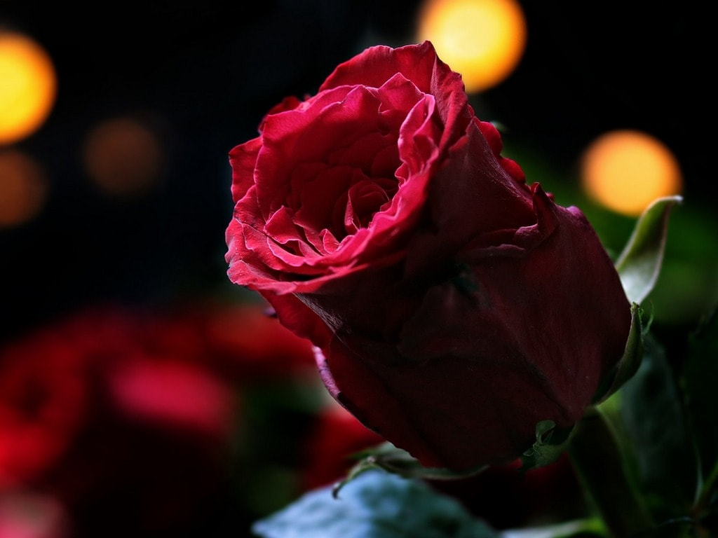 rose-day-1024