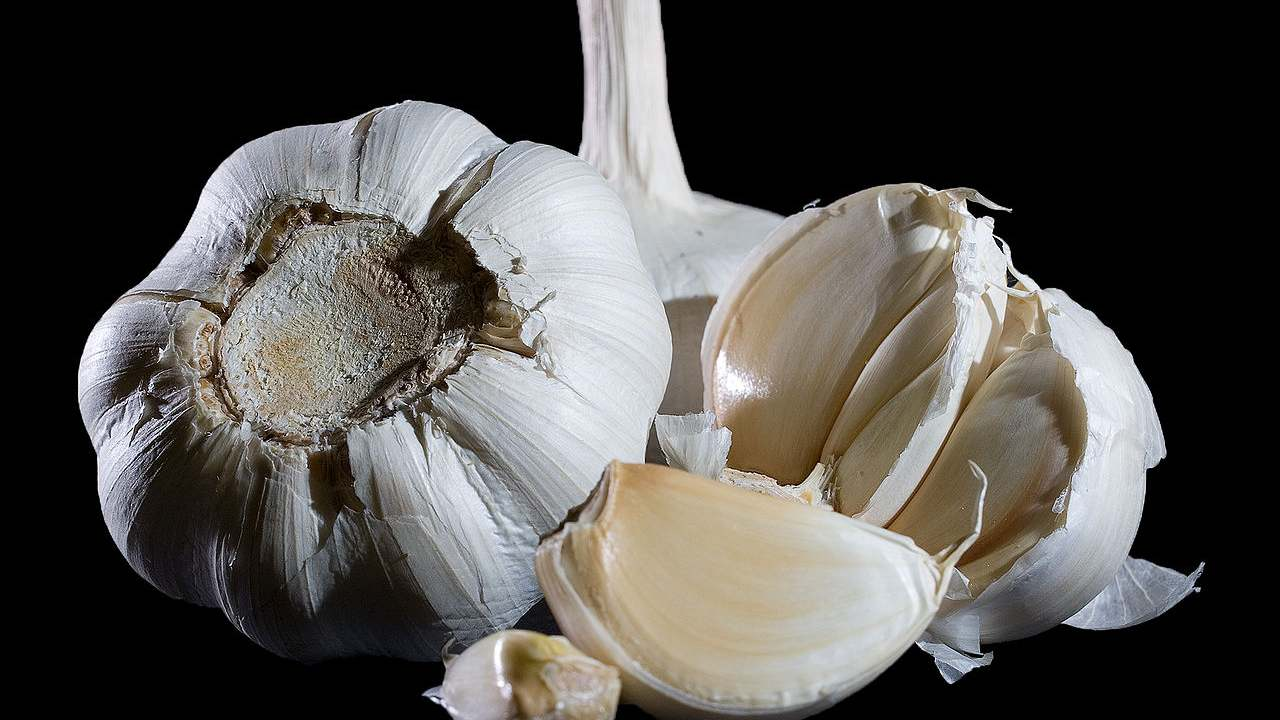 Eating garlic wont keep the virus away but it will help in social distancing. Image credit: Wikipedia