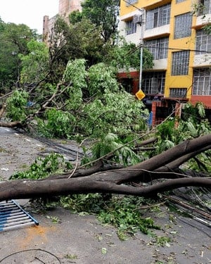 Uprooted trees lying on a street due to Super Cyclone Amphan, in Kolkata. PTI