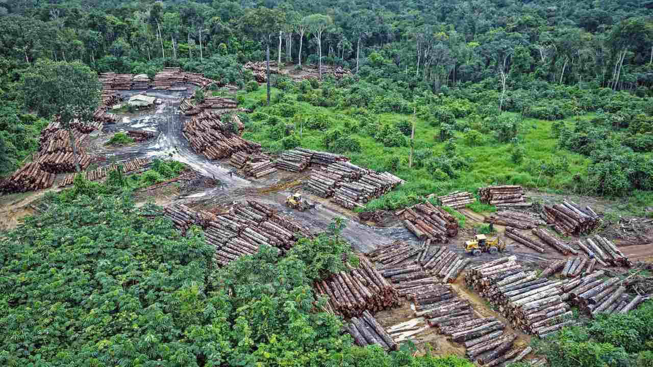 Bolsonaro's policies lead to 12 year high of deforestation rates in the Amazon rainforest- Technology News, Gadgetclock