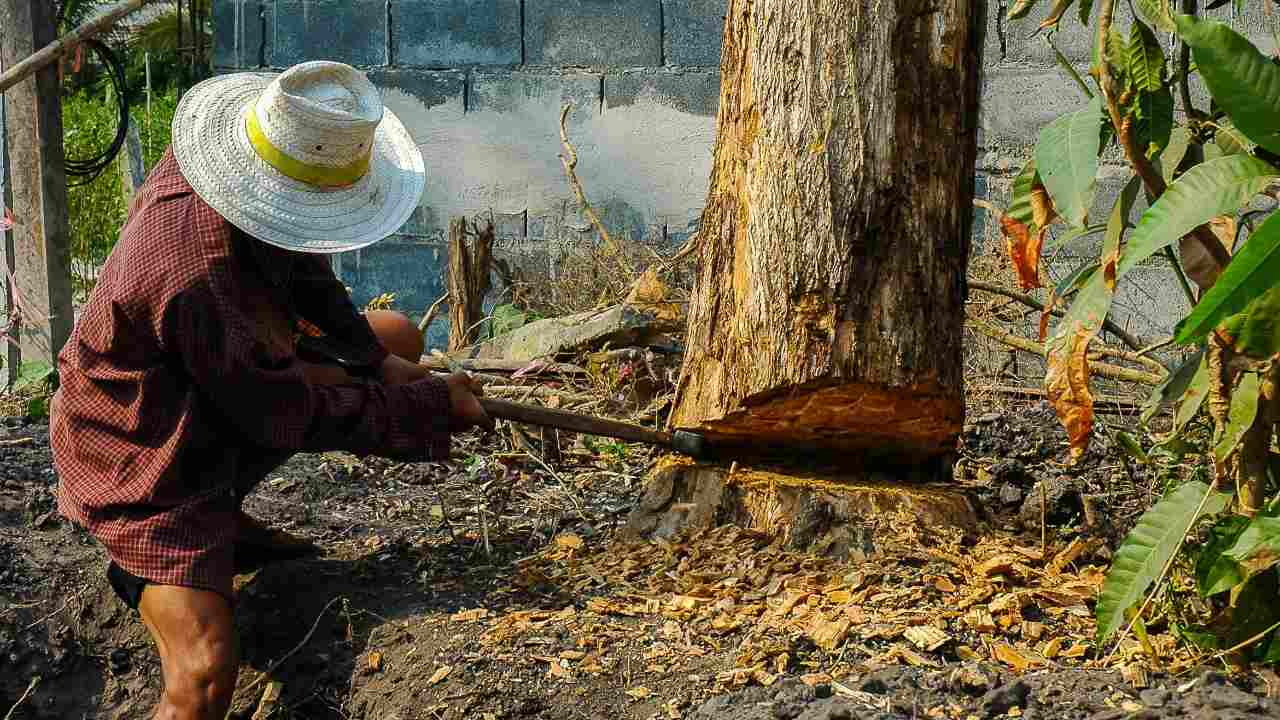 World Environment Day: Tribal people are deeply affected with COVID-19 as forest produce worth Rs 1.2 Trillion could go to waste- Technology News, Firstpost