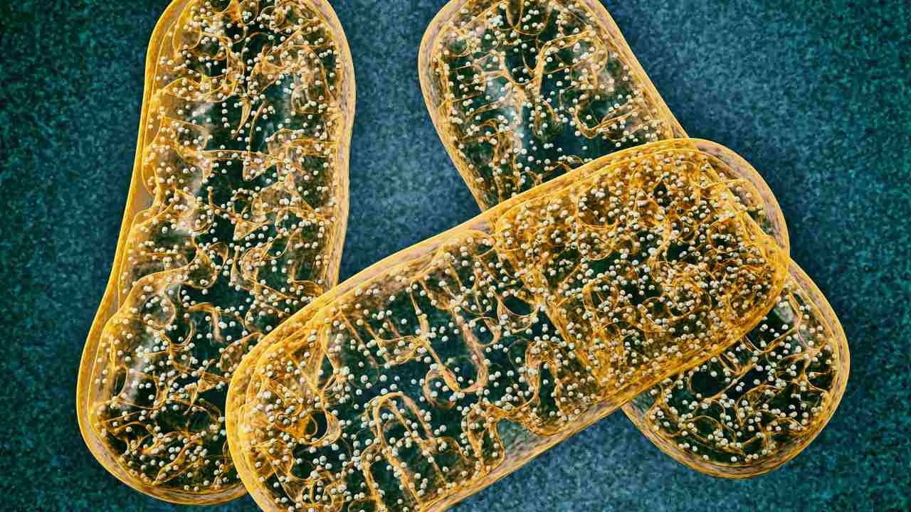 Scientists discover that competition between mitochondrial DNA in a cell decides which variant prevails