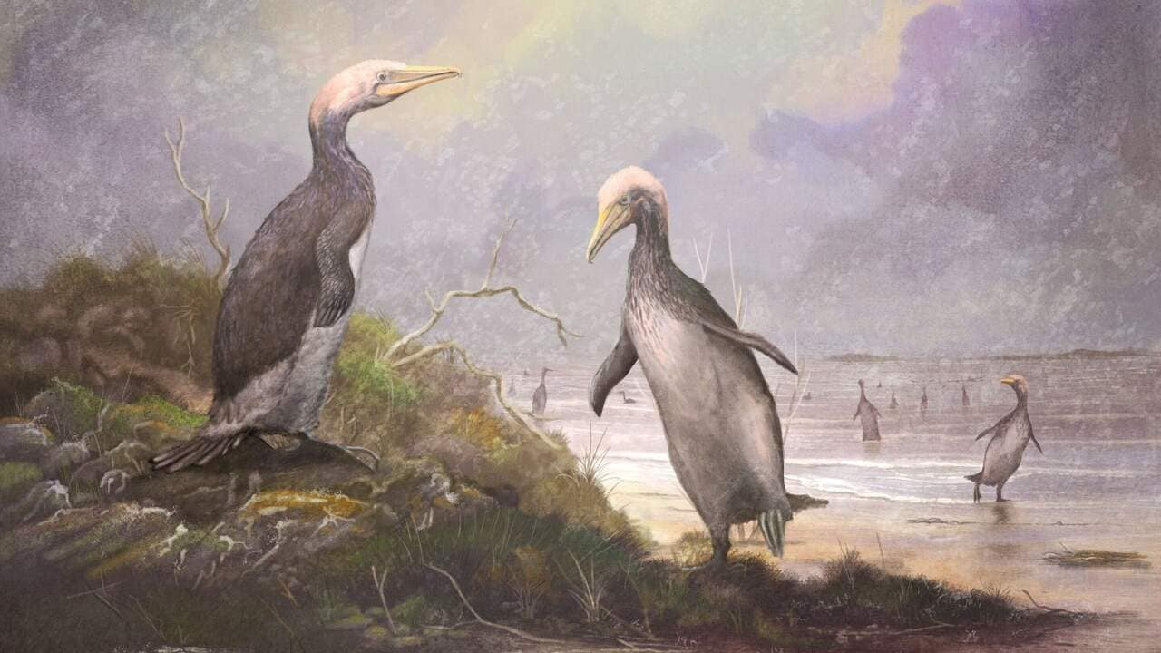 New Zealand's monster penguins had doppelgangers in Japan, the USA and Canada - Firstpost