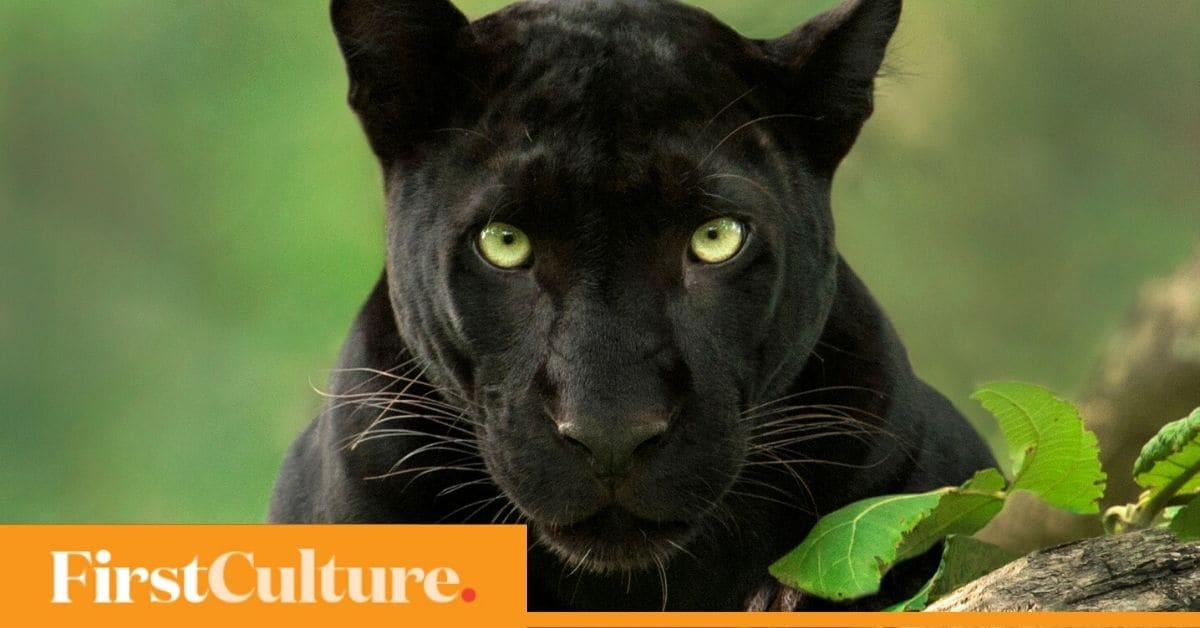 Wildlife photographer Shaaz Jung: Next big issue India will face is man-animal conflict - Firstpost