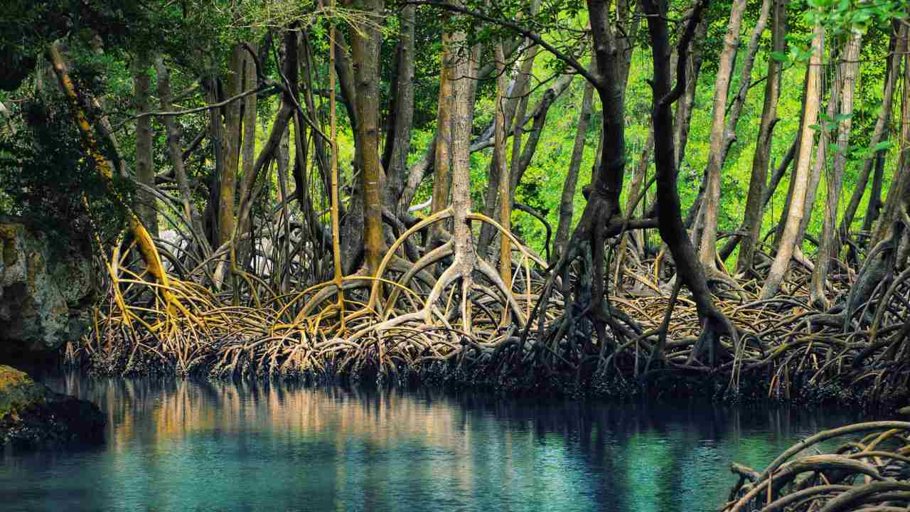 Mangrove forests and coral species can be found in the oil spilled protected wetlands on Mauritius
