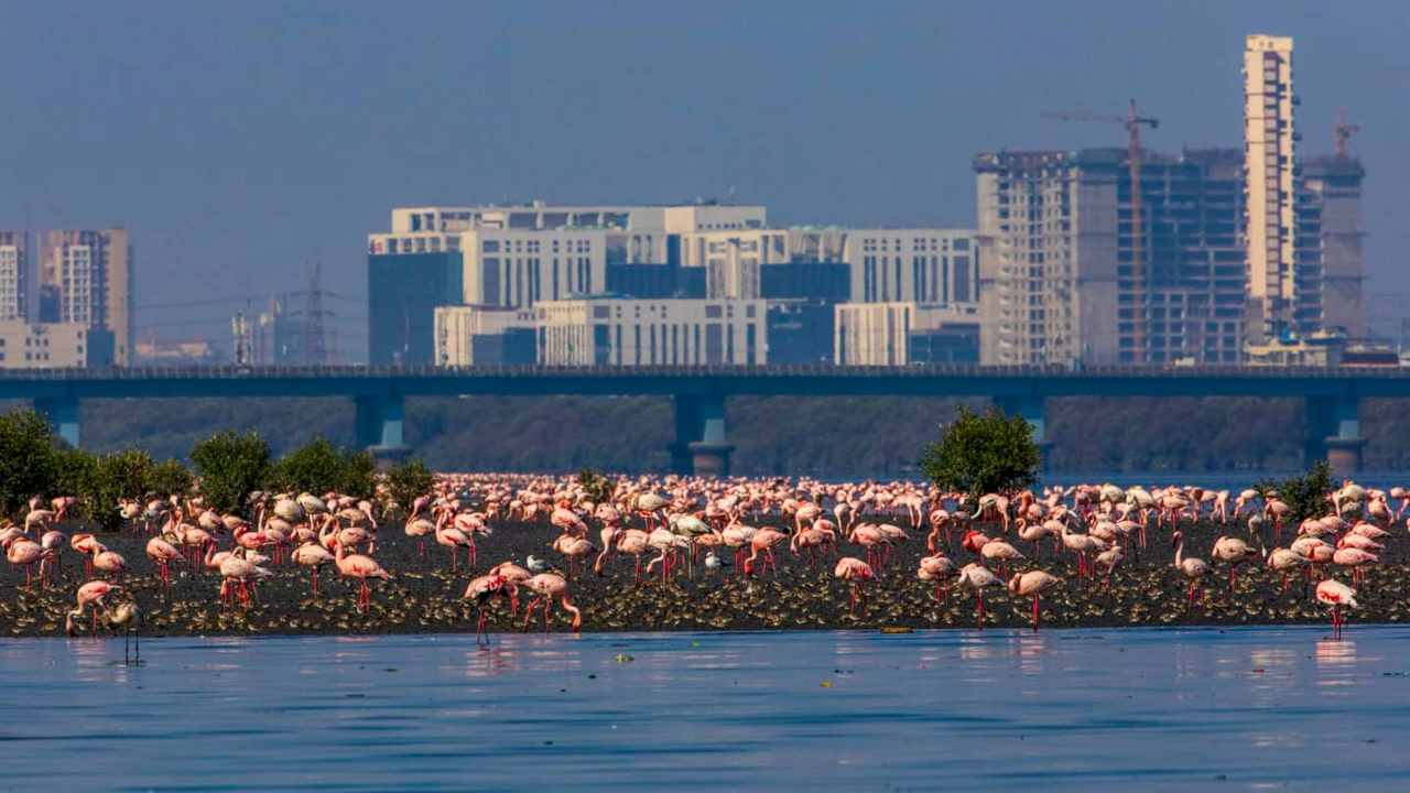 'Biodiversity by the Bay' aims to channel the power of Mumbai's youth to save the city's natural habitats
