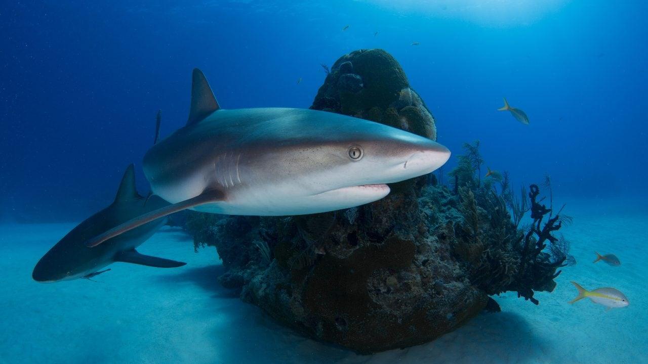 Coronavirus vaccine manufacturers are not mass slaughter sharks