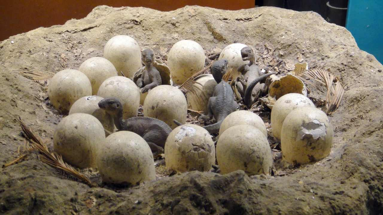 Dinosaur eggs real Have You