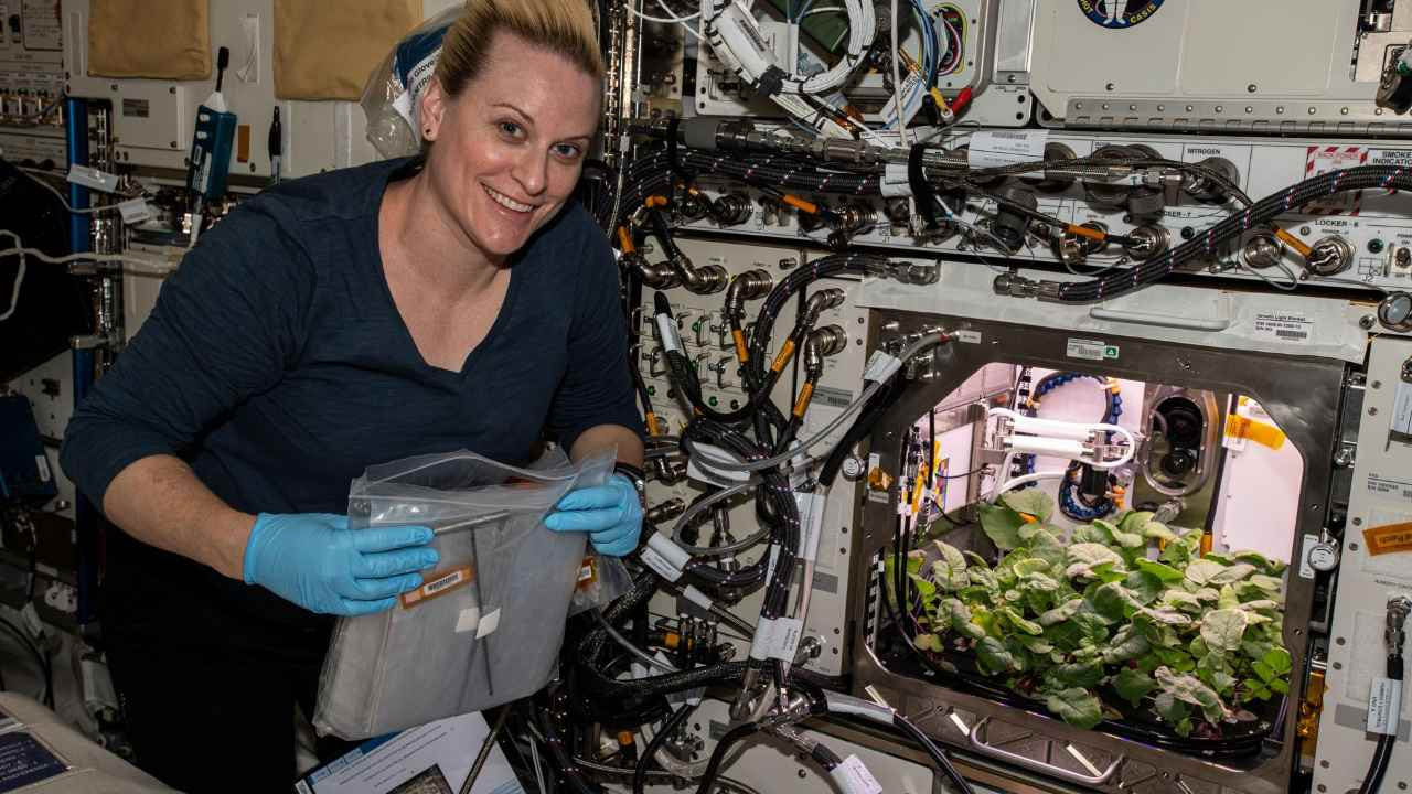NASA astronauts harvest radish crop aboard the ISSfor the first time ever– Technology News, Gadgetclock
