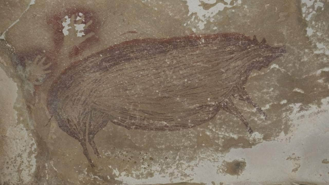 Life sized picture of a wild pig is the worlds oldest cave painting from 45,000 years ago