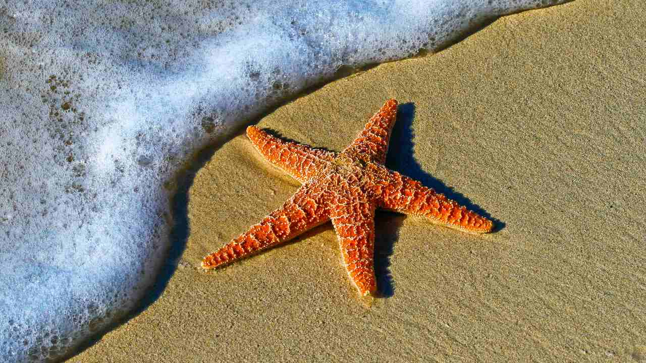 Starfish: Rare fossil helps answer the mystery of how they evolved arms