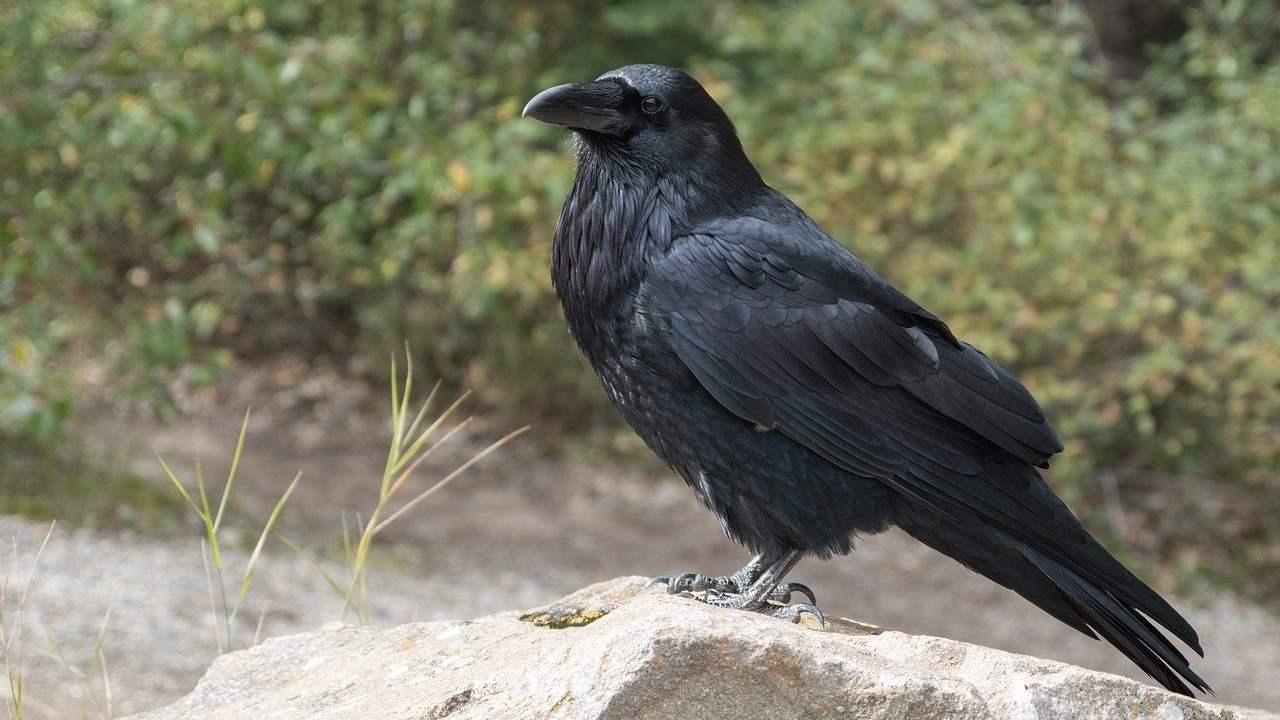 Bird flu scare in Karnataka following death of six crows, samples sent for testing