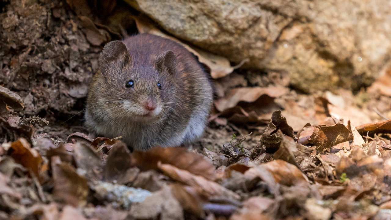 Study on mice show positive results to stop ageing process- Technology News, Gadgetclock