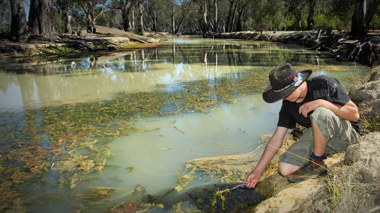 Lembah Murray – Darling di Australia menyediakan 50 persen air minum bagi Adelaide bersama dengan kota-kota lain. Sebagian besar masalah pencemarannya termasuk kebocoran septik dari rumah, limpasan air hujan yang terkontaminasi dan pembuangan pasir. Kredit gambar: Otoritas Cekungan Murray – Darling