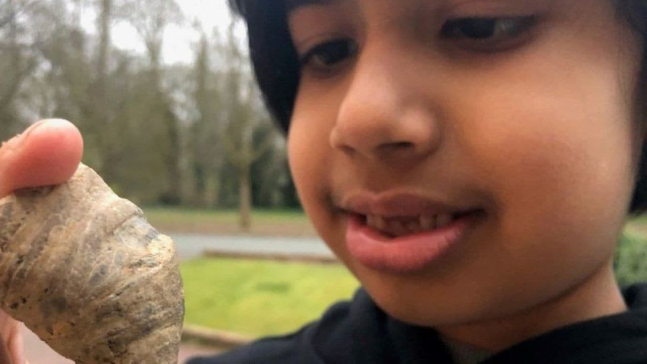 Six-year-old stumbles on coral fossil from million of years ago in England garden- Technology News, Gadgetclock