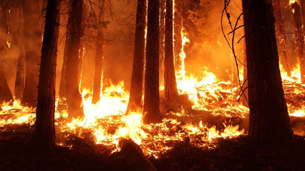 The winter season between November and February was drier than usual, increasing the risk. The wildfire season starts in November and lasts until the onset of the monsoon in June. Representational Image
