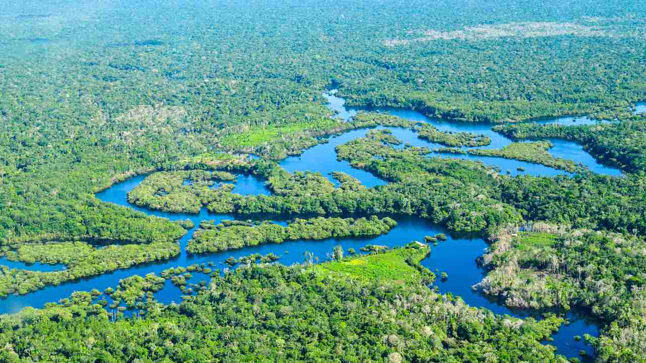 Brazil's Amazon forest released more CO2 than it absorbed over the last decade: Study- Technology News, Firstpost
