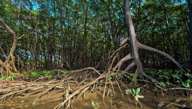 World Environment Day 2021: 'Ecosystem restoration' is this year's theme; day is observed every year since 1972