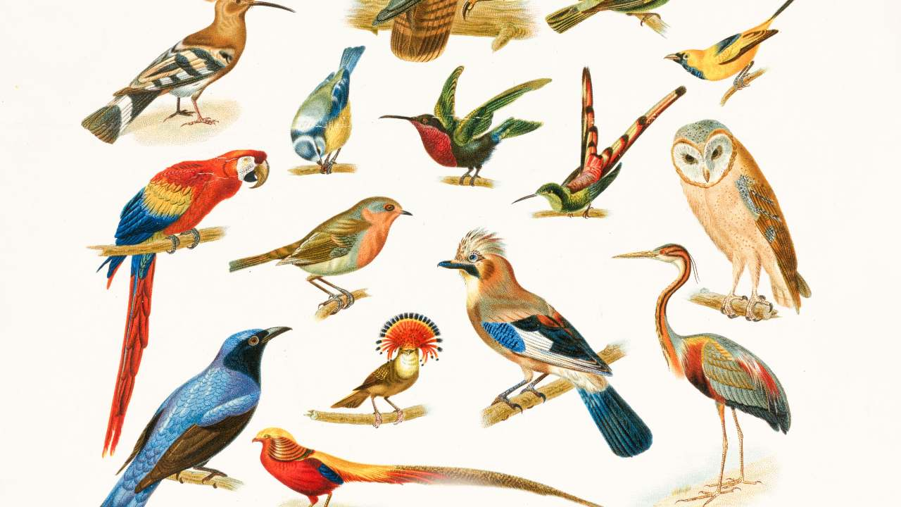 Earth is currently home to anywhere between 50 billion to 428 billion birds, says new study- Technology News, Gadgetclock