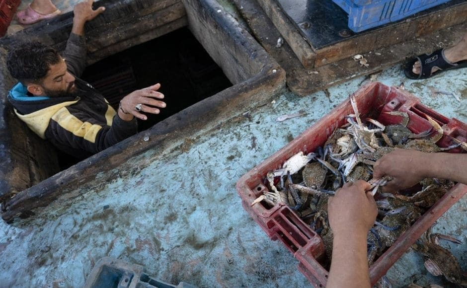 Buyers were already waiting to make their bids on boxes of fish arrayed on the ground after being unloaded from the boats, where young boys working as deckhands assisted older men in sorting and washing their catch. The fish were then loaded onto horse-drawn carts for delivery to local markets.   In the picture: A fisherman climbs out of the hold as the boat's haul is sorted before delivery to market in Gaza City, on Sunday, 23 May, 2021. Photo via The Associated Press/John Minchillo