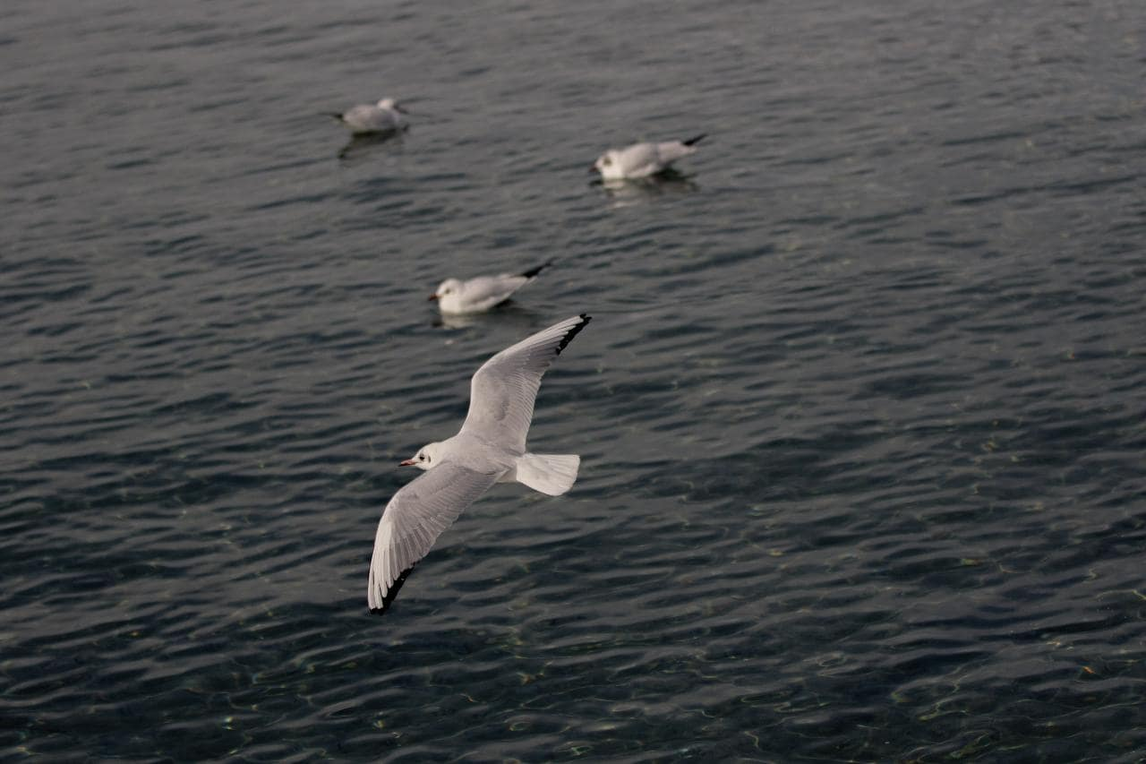 World Oceans Day 2021: Seabirds act like canaries in a coal mine, send an urgent message from the ocean- Technology News, Firstpost