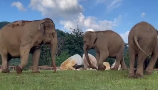 Watch: Video of elephant guiding blind friend towards food goes viral