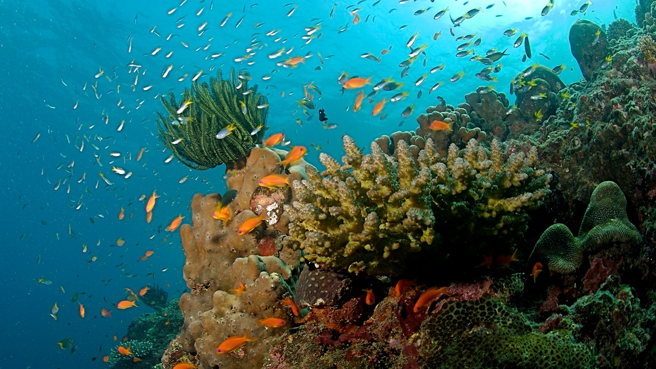 Some species of corals are becoming resilient to warming ocean temperatures