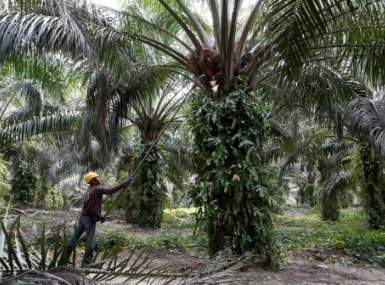 Indias palm oil imports likely to jump to record high in 2018-19 as prices witness sharp decline: Report