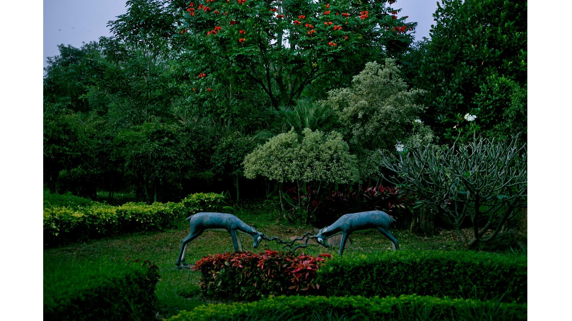 bengaluru-trees-3
