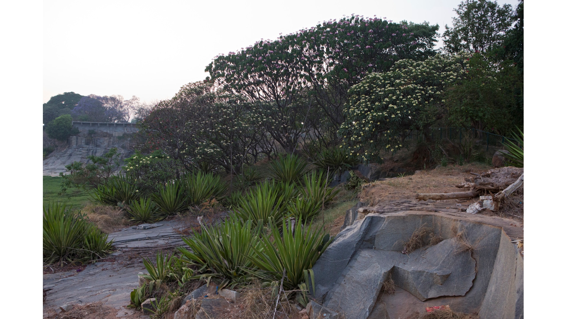 bengaluru-trees-8