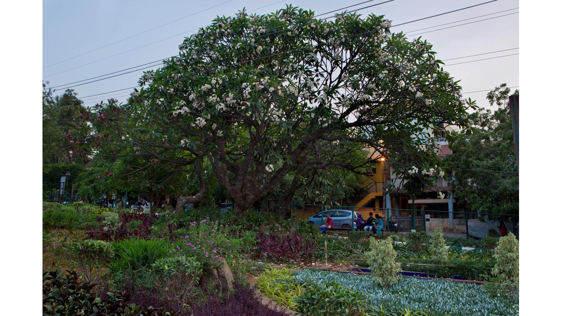 bengaluru-trees-10