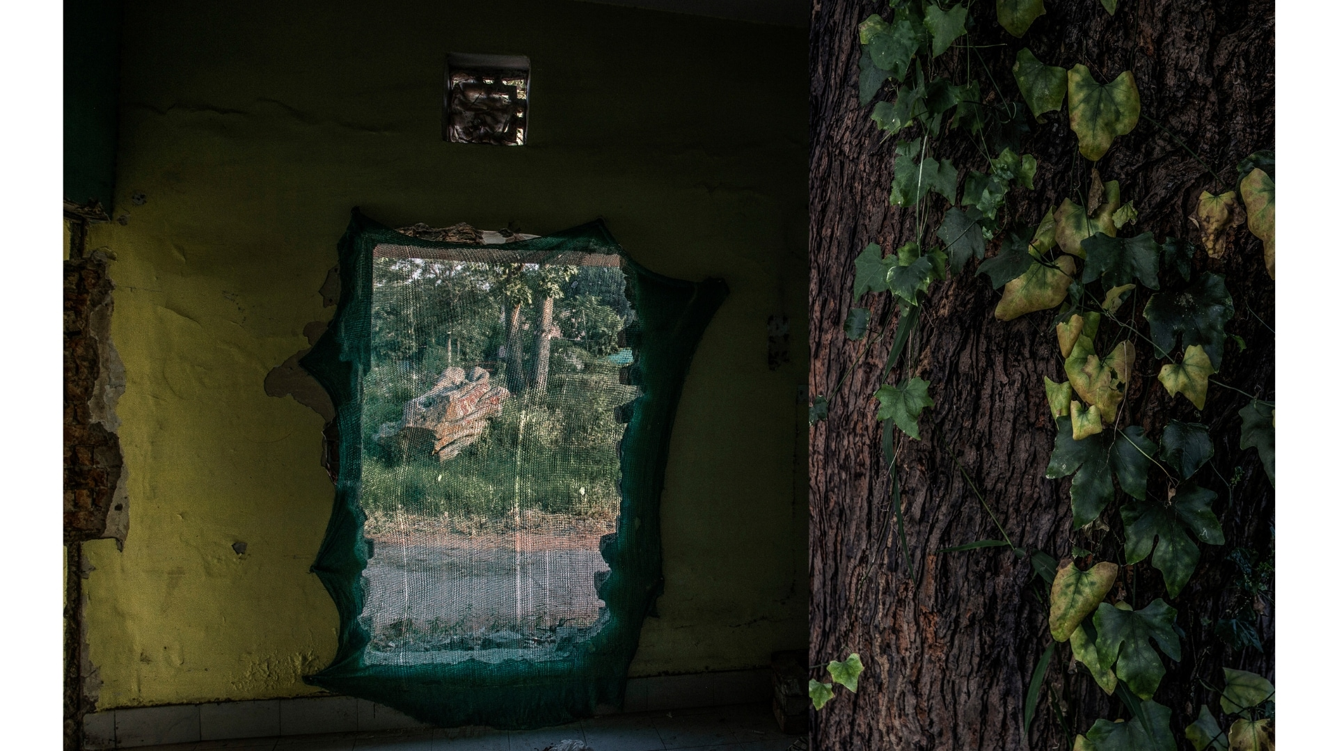 Human/Nature: In photos of trees and crumbling houses, a criticism of modern development - Firstpost