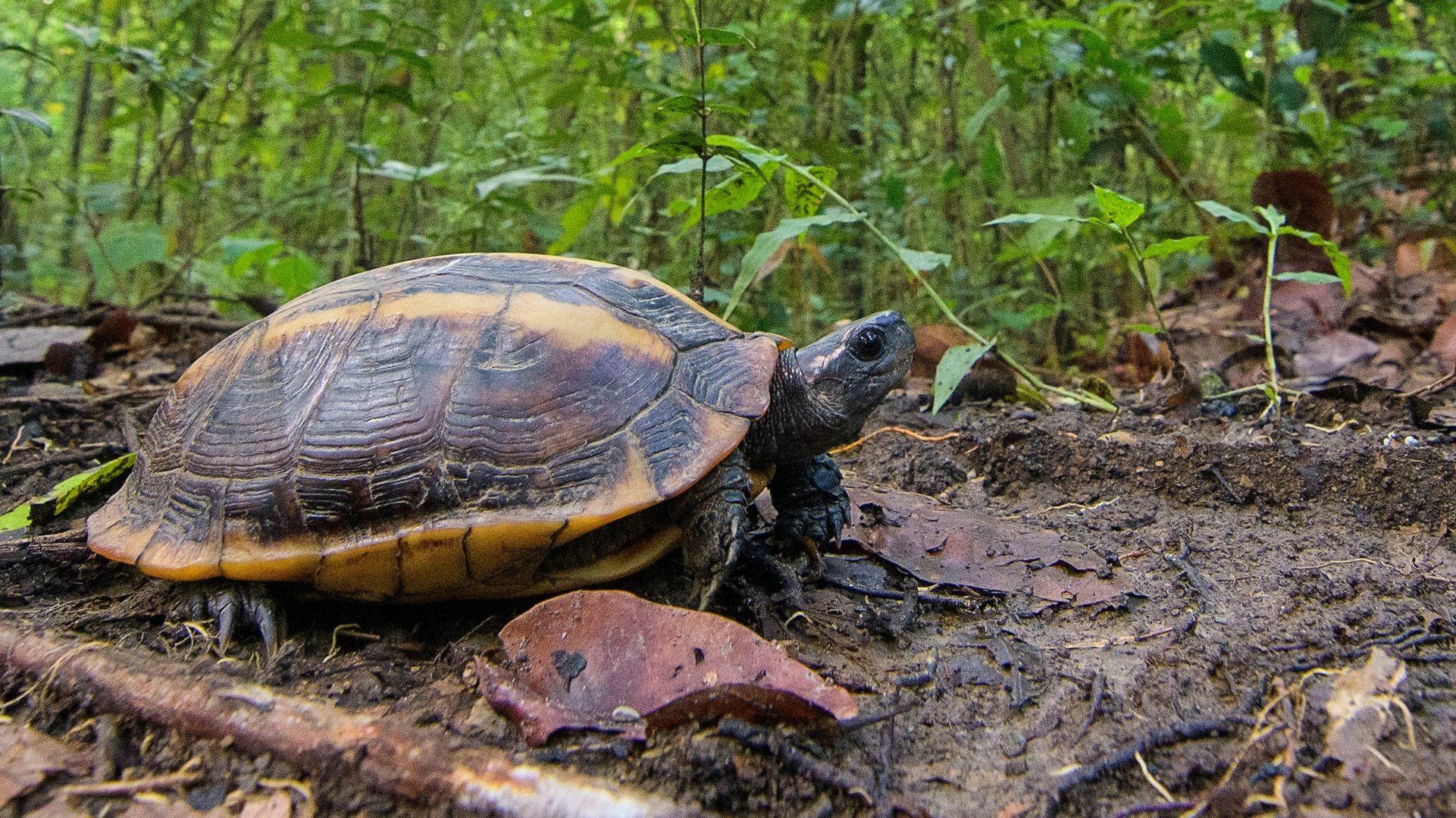 World Turtle Day: Two wildlife biologists are encouraging people to document species in India