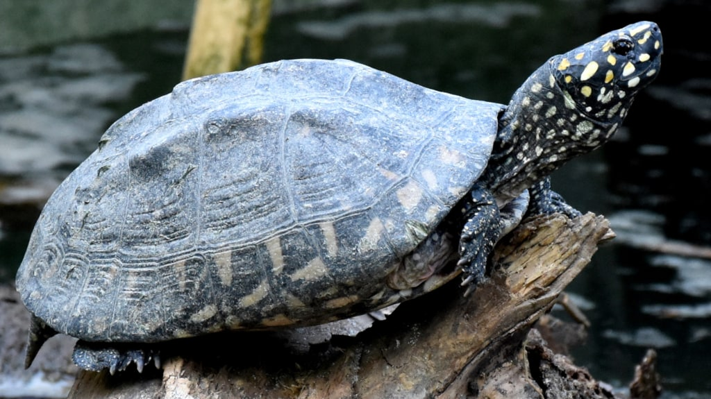 World Turtle Day: Two biologists are encouraging people to document species in India - Firstpost