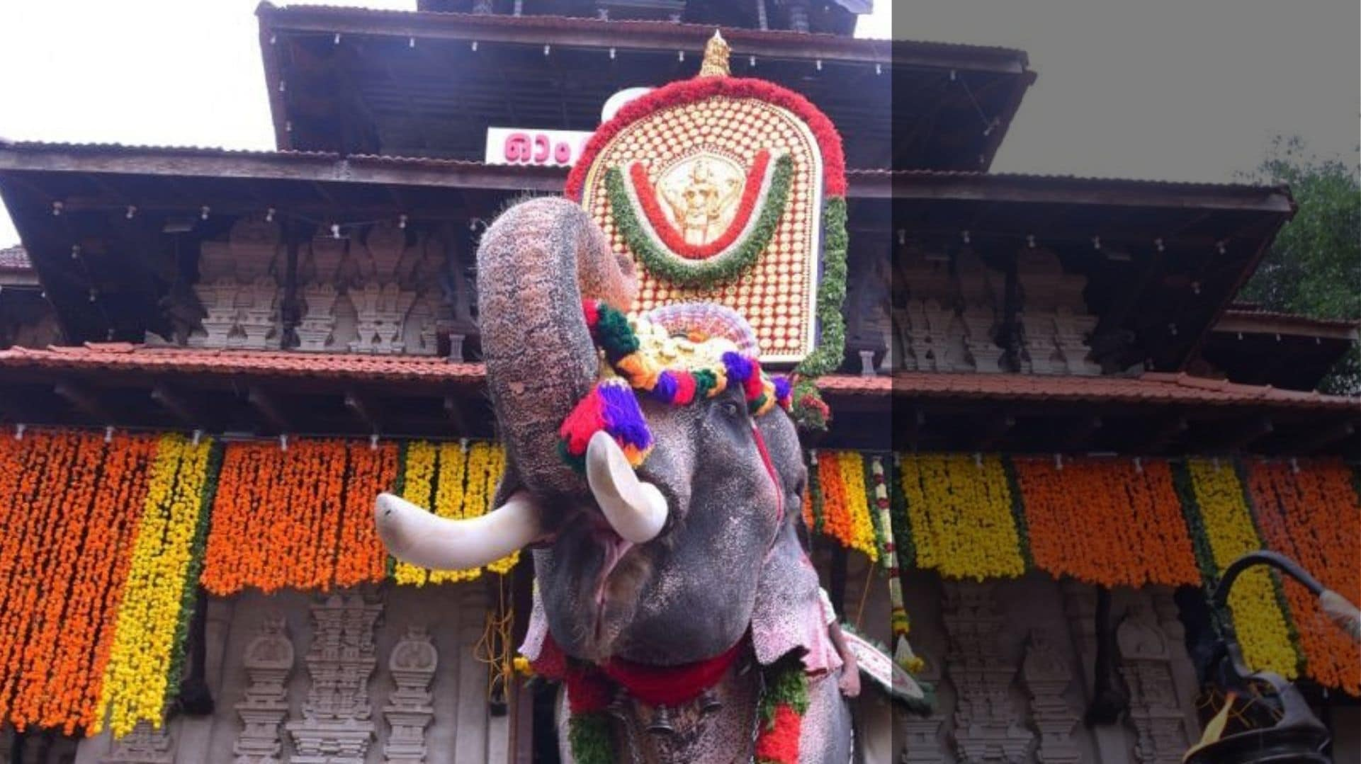 To parade or not: An elephantine problem at Thrissur Pooram