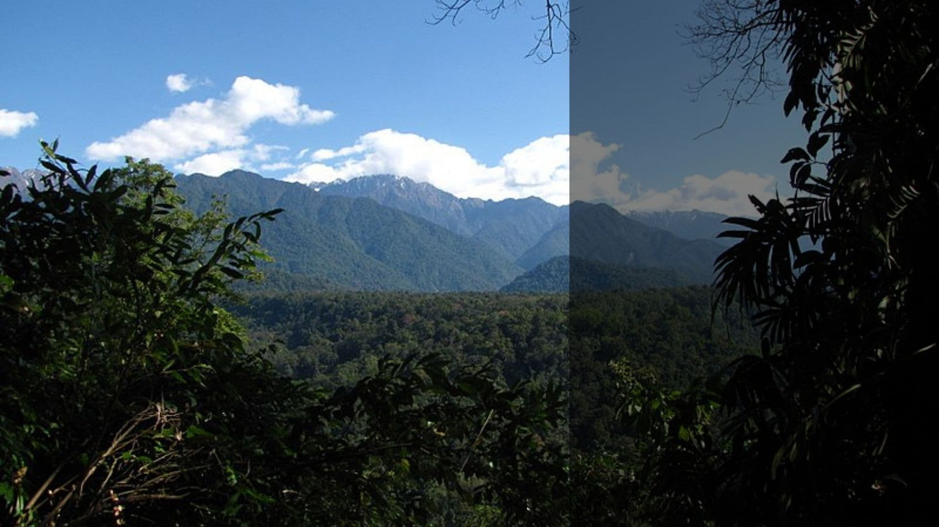 Climate change: Indian forests resilient to large shifts in rainfall, new study suggests
